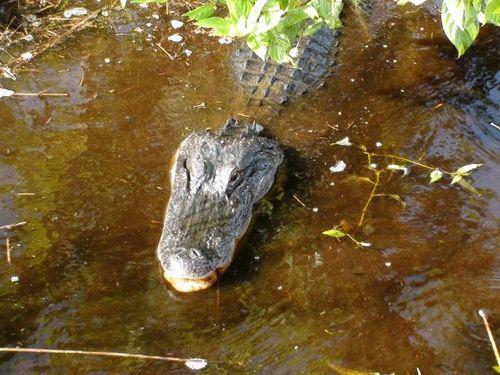 Mommy croc