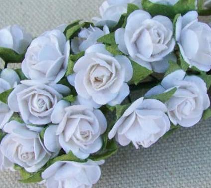 Prima roses